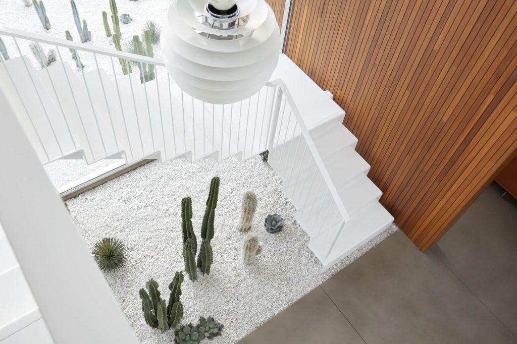 Cactus Yard3